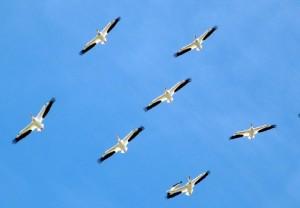 birds-112083_pq